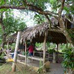 Holzhütte auf dem Bauernhof in der dominikanischen Republik. Dort konnte wir die Rohform von Kaffee, Kakoa & Bananen kennenlernen.