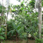 Ein kleiner Bauernhof in der Dominikanischen Republik, welchen wir besucht haben. Dort konnten wir Kaffee, Kakao, Bananen, etc. in ihrer Rohform kennenlernen.